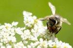 Если Вас ужалила пчела