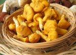 Блюда с грибами: лисички
